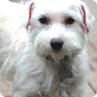 Adopt A Pet :: AnneMarie adoption pending - Norwalk, CT