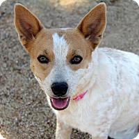 Adopt A Pet :: Bonnie - Phoenix, AZ