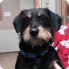 Adopt A Pet :: Lolly Pop