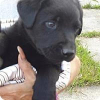 Adopt A Pet :: ATHENA - Birmingham, MI
