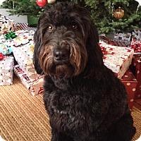 Home At Last Dog Rescue Surrey Bc