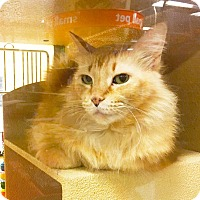 Adopt A Pet :: Autum - Arlington/Ft Worth, TX
