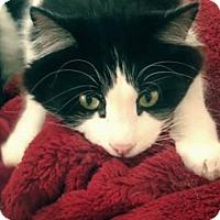 Adopt A Pet :: Maloney - Brooklyn, NY