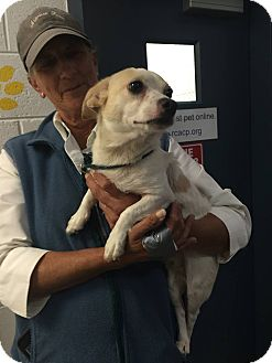 Chihuahua Mix Dog for adoption in Fincastle, Virginia - Skipper
