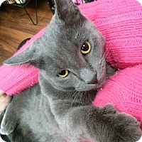 Adopt A Pet :: LM-Zeus - Broomall, PA