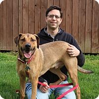 Adopt A Pet :: Trapper - Elyria, OH