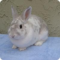 Adopt A Pet :: Stewart - Bonita, CA