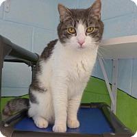Adopt A Pet :: C-64934 Sebastian - Westampton, NJ