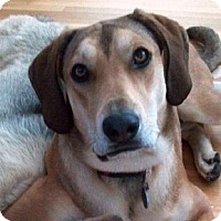 Adopt A Pet :: I'm A Sunny Girl - Sacramento area, CA