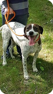 Pointer/Hound (Unknown Type) Mix Dog for adoption in Brooklyn Center, Minnesota - Poppy