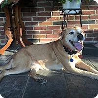 Adopt A Pet :: Kizzy - Buckeystown, MD