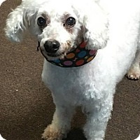 Adopt A Pet :: Billy - Valparaiso, IN