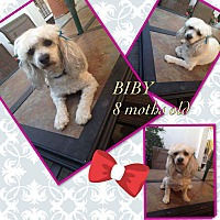 Adopt A Pet :: Biby - LAKEWOOD, CA