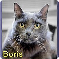 Adopt A Pet :: Boris - Aldie, VA