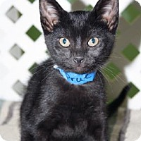 Adopt A Pet :: Prue - Norman, OK