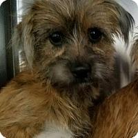 Adopt A Pet :: Pauly - Monrovia, CA