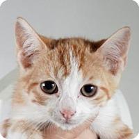 Adopt A Pet :: Finn - Atlanta, GA
