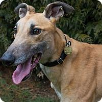 Adopt A Pet :: Chubby - Seattle, WA