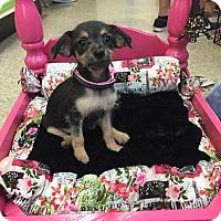 Adopt A Pet :: Tater Tot - Brea, CA
