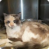 Adopt A Pet :: Bella - Riverside, RI