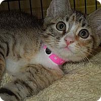 Adopt A Pet :: Cecily - Medina, OH
