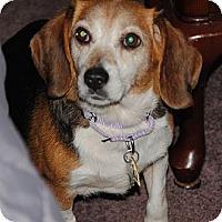 Adopt A Pet :: Bubbles - Novi, MI