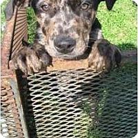 Adopt A Pet :: Bobby - Richmond, VA