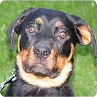Adopt A Pet :: Stella - Rigaud, QC
