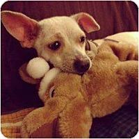 Adopt A Pet :: Ruby - Los Angeles, CA