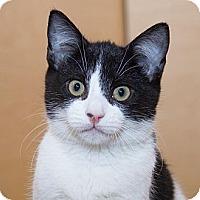 Adopt A Pet :: Cory - Irvine, CA