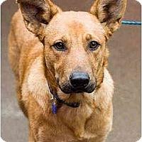Adopt A Pet :: Big Buddy - Portland, OR