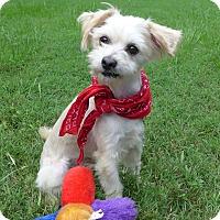 Adopt A Pet :: Davis - Mocksville, NC