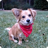 Adopt A Pet :: Bentsen - Mocksville, NC