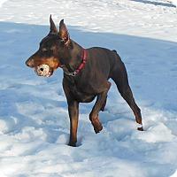 Adopt A Pet :: Ace - Arlington, VA