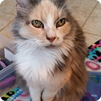 Adopt A Pet :: Princess Peach - San Antonio, TX