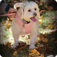 Adopt A Pet :: Dakota - Meet Her!!! - Norwalk, CT