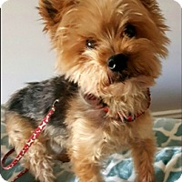 Adopt A Pet :: Rocky - Whiting, NJ