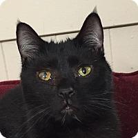 Adopt A Pet :: Lola - New Windsor, NY