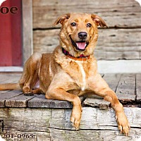 Shepherd (Unknown Type) Mix Dog for adoption in Terre Haute, Indiana - Moe