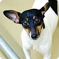 Adopt A Pet :: Bjork (FL) - Gainesville, FL