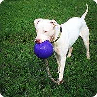 Adopt A Pet :: Rico Suave - Lincoln, NE