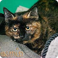 Adopt A Pet :: Jasmin - Somerset, PA