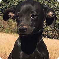 Adopt A Pet :: Tito - Staunton, VA
