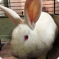Adopt A Pet :: Marshmallow - Edinburg, PA