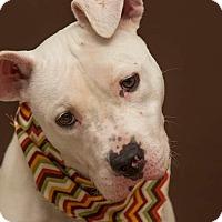Terrier (Unknown Type, Medium) Mix Dog for adoption in Flint, Michigan - Dallas