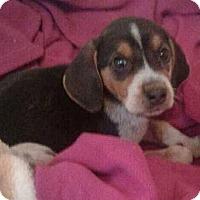 Adopt A Pet :: Ferguson - Cincinnati, OH