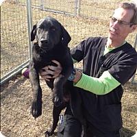 Adopt A Pet :: Rita - Barnwell, SC