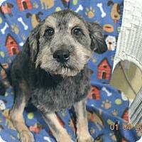 Adopt A Pet :: Corky Adopted! - Brattleboro, VT