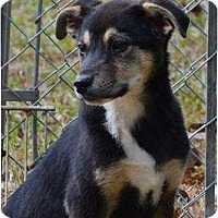 Adopt A Pet :: Nicky - New Boston, NH