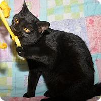 Adopt A Pet :: Mars - Medina, OH